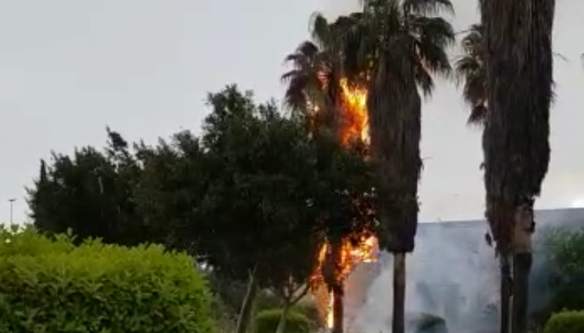 Maltempo, forte grandinata a Lecce: albero colpito da un..